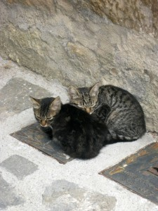 Civita Kitties