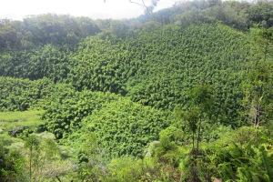 Waikamoi Nature Trail