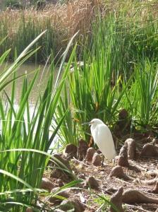 Egret1